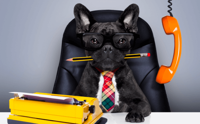 Why Your Next Hire Should Be An Office Dog